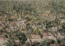 خسارت ۱۵۰ میلیارد تومانی سرما به کشاورزی اصفهان/ کاهش ۵۰ درصدی حجم سد زاینده رود/ باید بیمه کشاورزی اجباری شود