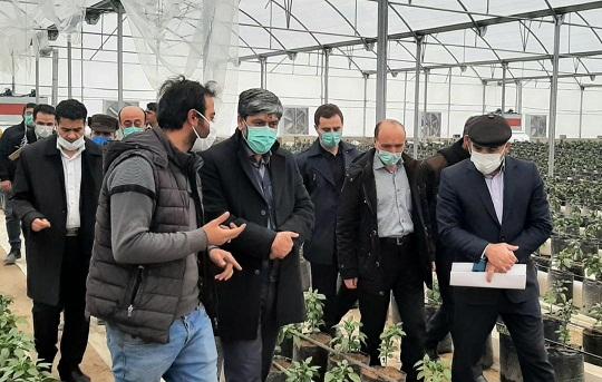 حمایت بانک کشاورزی از طرحهای گلخانهای / پرداخت بیش از ۲۴۰ میلیارد ریال تسهیلات بانکی به شهرک گلخانهای سامیان اردبیل