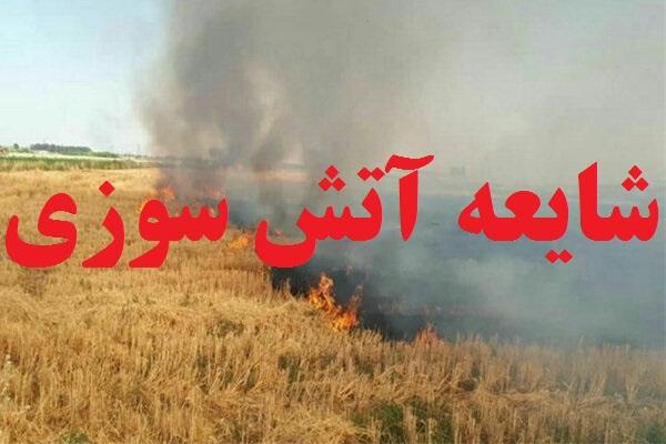 آتشسوزی در جنگل فندقلو شایعه بود